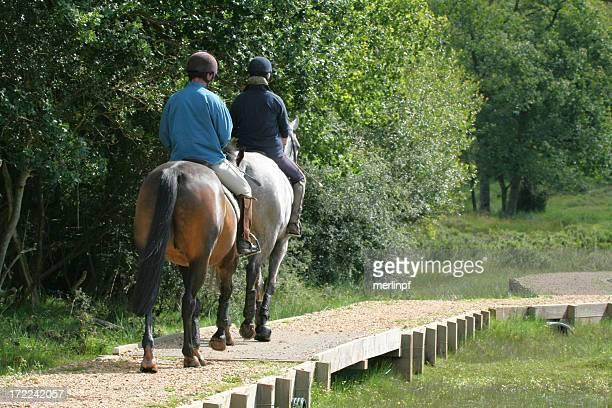 乗馬のニューフォレスト - 乗馬ズボン ストックフォトと画像