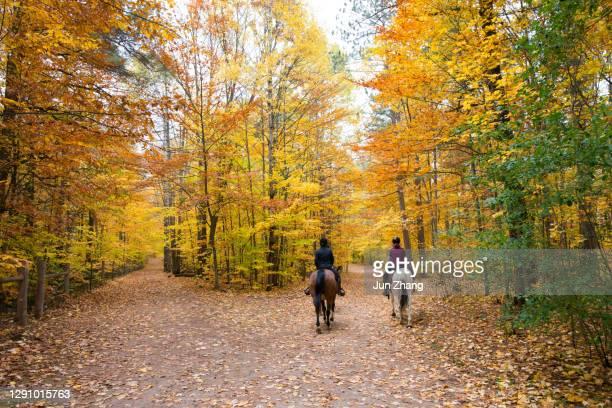 paardrijden in het bos in ontario, canada - paardrijden stockfoto's en -beelden