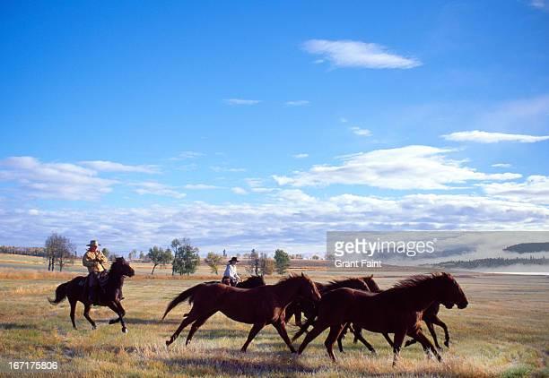 horse round up - grupo mediano de animales fotografías e imágenes de stock