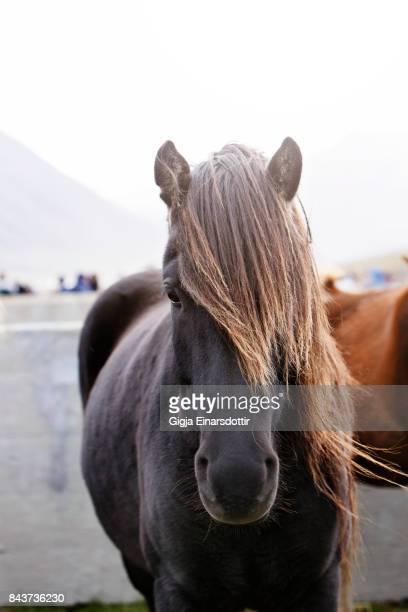 Horse Roundups