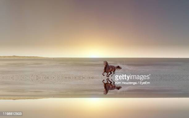horse running at beach during sunset - one animal stock pictures, royalty-free photos & images