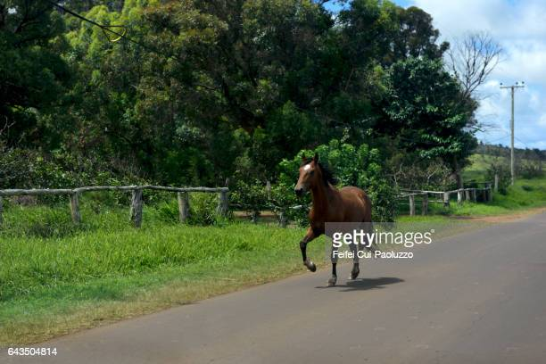 a horse running at road near ahu akivi moai site in easter island oc chile - horse easter stock pictures, royalty-free photos & images