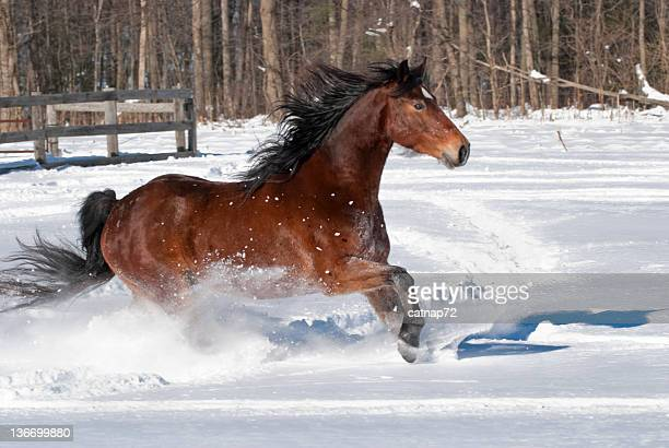 Horse Running Free in Snow and Sunlight