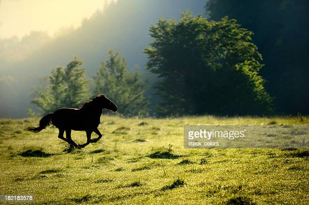 horse running in nature