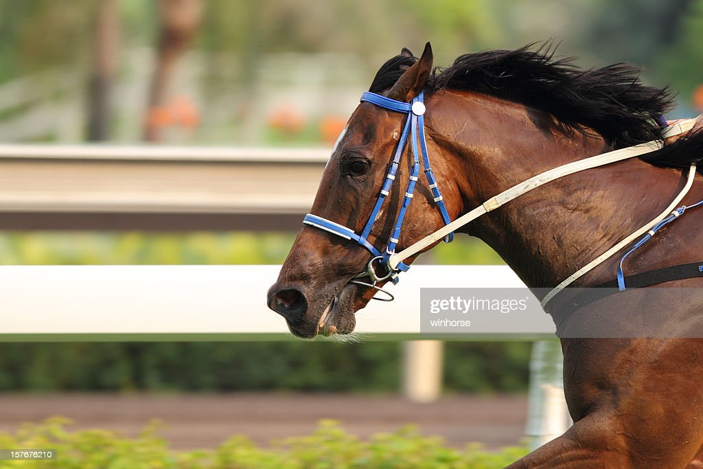 Horse running on a track in motion : Stock Photo
