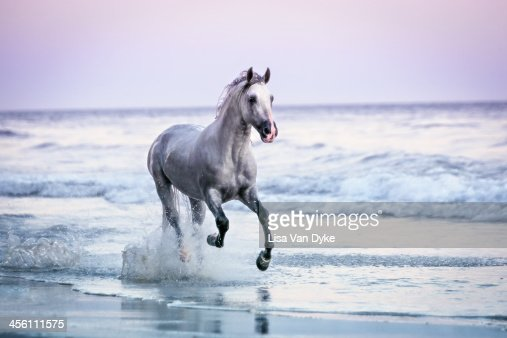 Horse Running On Beach Stock Photo | Getty Images - photo#19