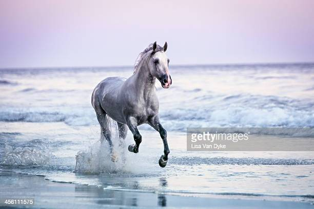 horse running on beach - horses running stock pictures, royalty-free photos & images