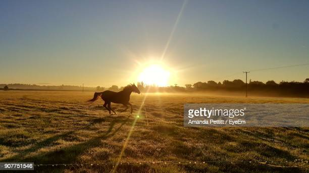Horse Running On Field Against Sky During Sunset