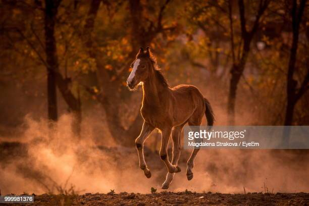 horse running on field - one animal stock pictures, royalty-free photos & images