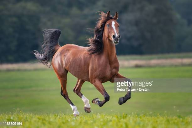 horse running on land - horse stock pictures, royalty-free photos & images