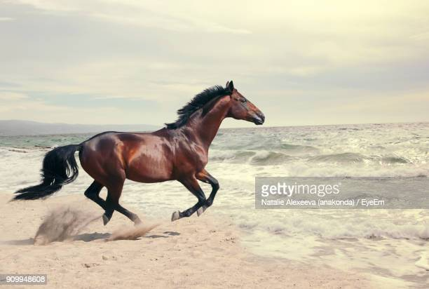 horse running on shore at beach - cheval photos et images de collection
