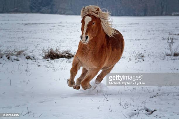 Horse Running On Snow Field During Winter