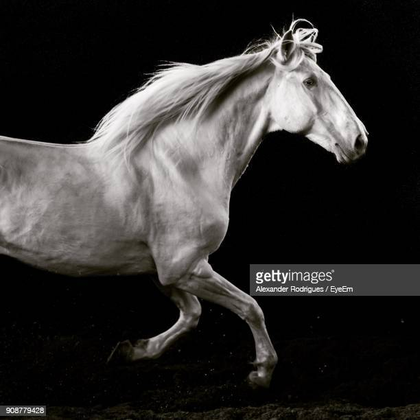 horse running over black background - equestrian animal photos et images de collection