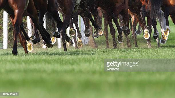 horse running - horse racing stock pictures, royalty-free photos & images
