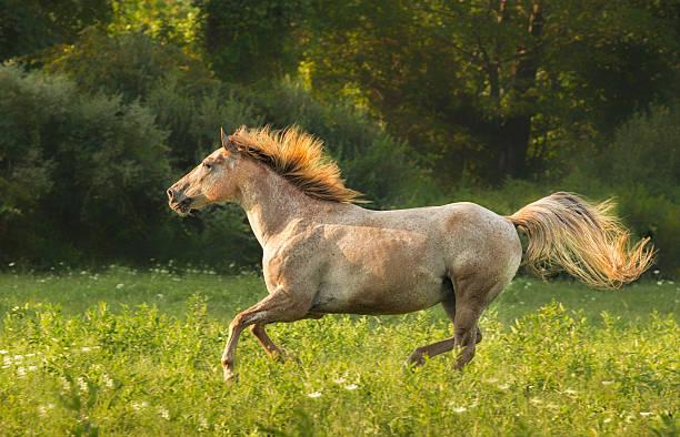 Horse Running Wall Art