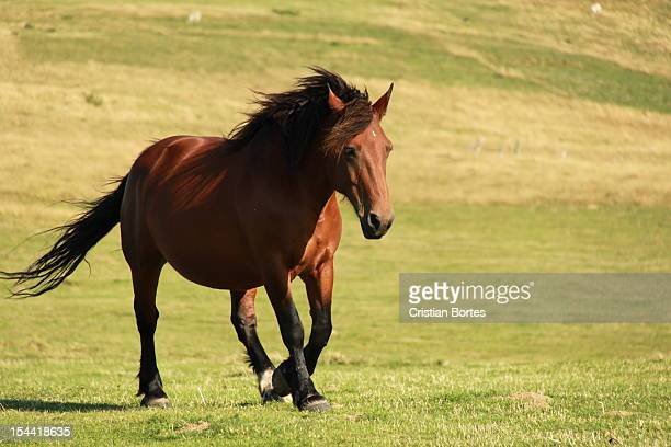 horse running - bortes stock pictures, royalty-free photos & images
