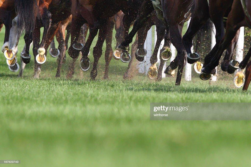 Horse Running : Stock Photo