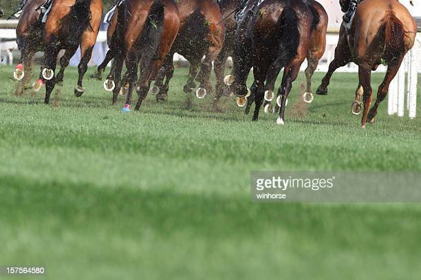 horse running - racehorse stock pictures, royalty-free photos & images