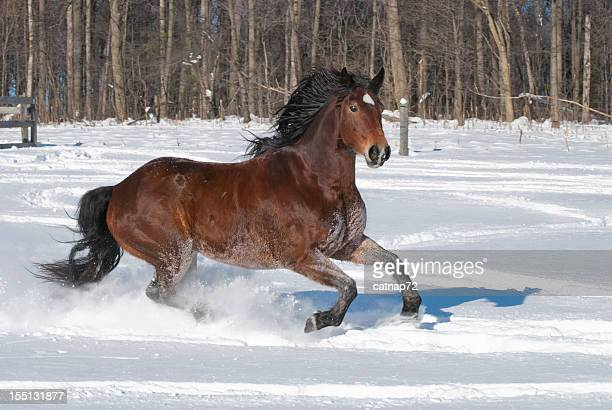 Horse Running through New Snow, Side View