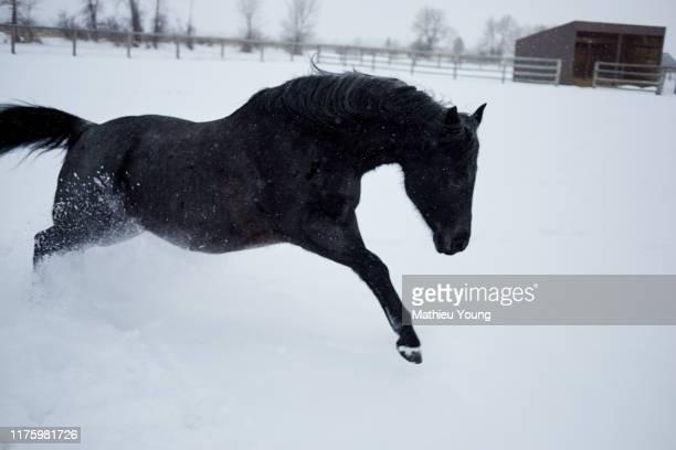 horse runs in snow - casa estilo rancho fotografías e imágenes de stock