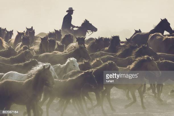 Horse Shepherd and his Wild Horses