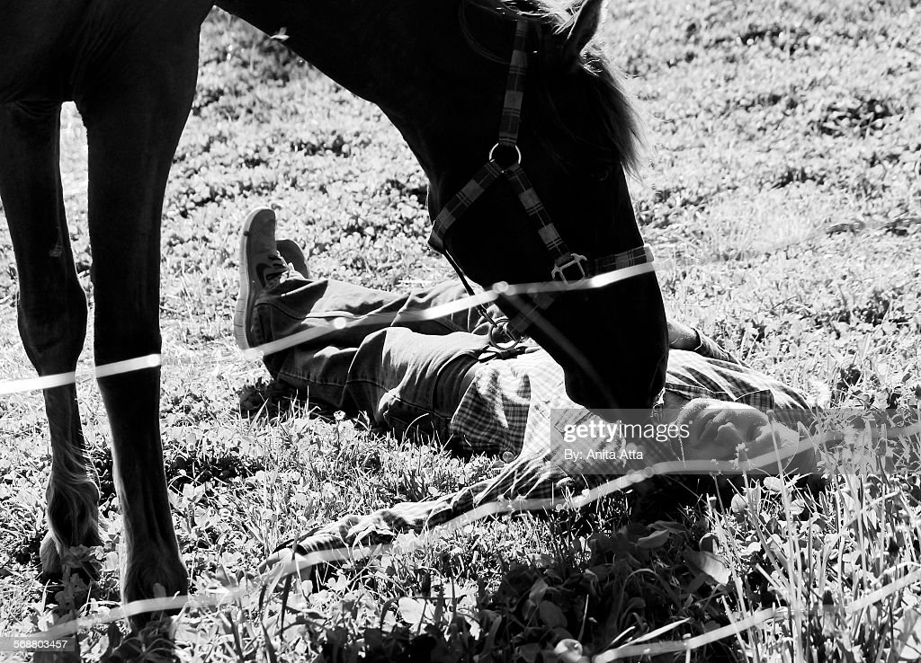 Horse sniffing person lying on ground : Stock Photo