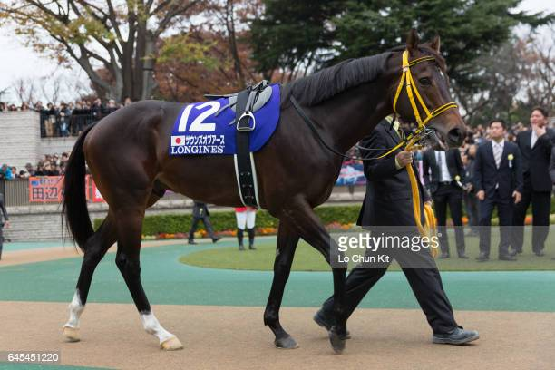 Horse Sounds Of Earth being led around the paddock during the Japan Cup at Tokyo Racecourse on November 27 2016 in Tokyo Japan