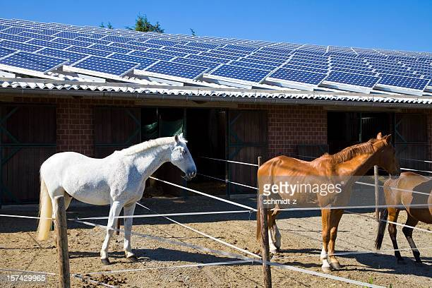 horse stable with solar panels and horses - solar energy dish stock pictures, royalty-free photos & images