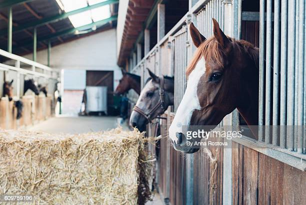horse stall with horses looking out of their boxes - pferd stock-fotos und bilder
