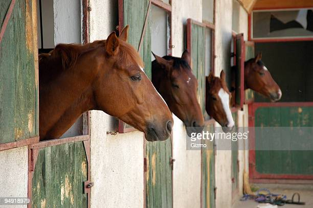 Horse stall with horses poking heads out