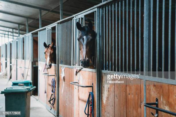 horse stalls in a horse riding school - working animal stock pictures, royalty-free photos & images