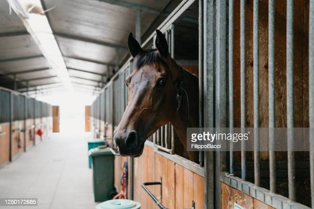 horse stalls in a horse riding school - equestrian event stock pictures, royalty-free photos & images
