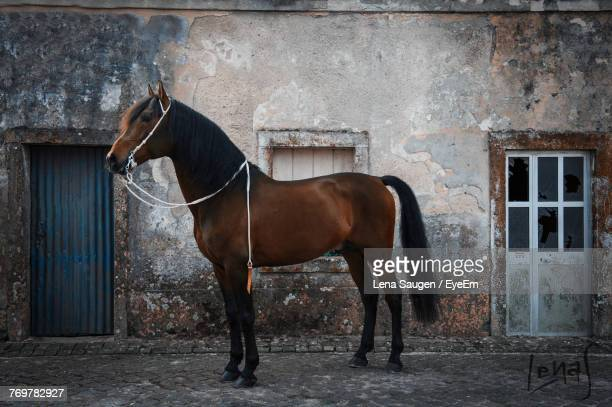 Horse Standing Against Building
