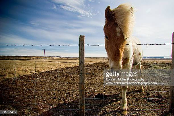 Horse standing beside barbed wire fence