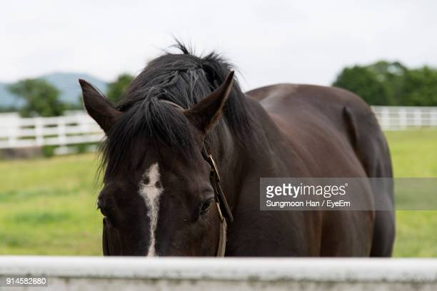 Horse Standing By Fence At Barn