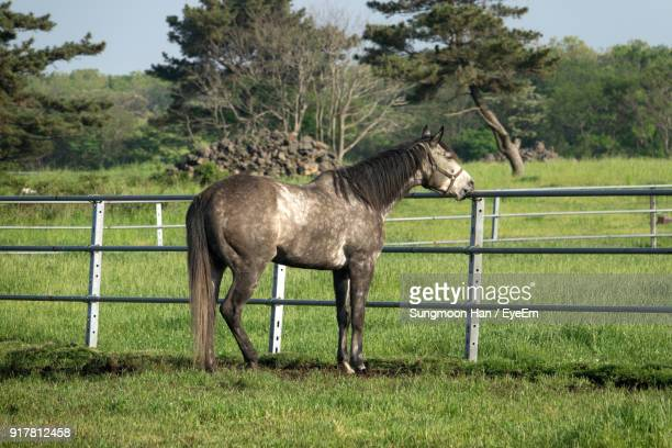 Horse Standing By Railing On Field Against Trees