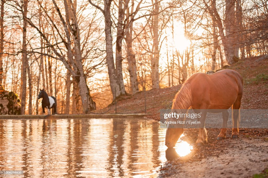 Horse Standing In A Forest During Golden Houre : Foto stock