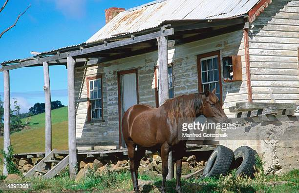 Horse standing in front of weatherboard house near Bream Creek.