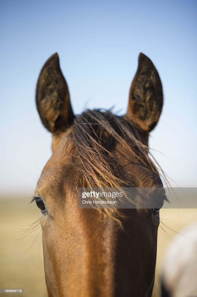 Horse standing in pasture in autumn : Stock Photo