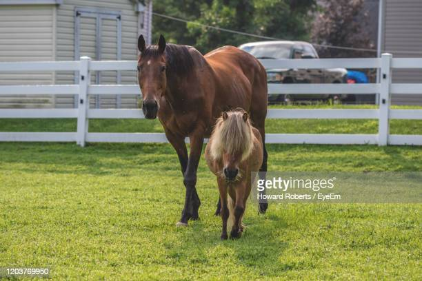 horse standing in ranch - howard ranch stock pictures, royalty-free photos & images