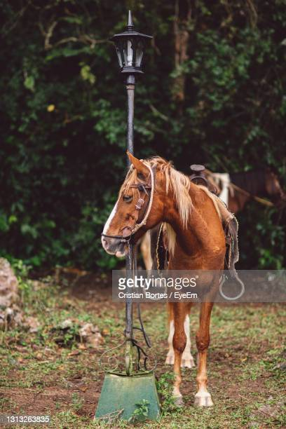 horse standing in ranch - bortes stock pictures, royalty-free photos & images