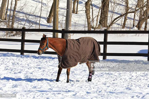 Horse standing in snow wearing cold weather cover