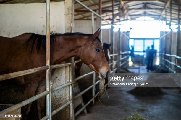 horse standing in stable - 柵 ストックフォトと画像