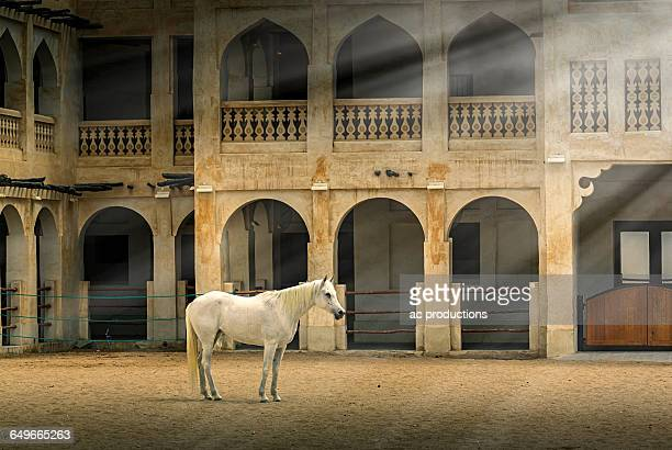 Horse standing in sunbeams near ornate building