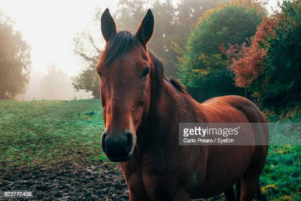 Horse Standing On Field Against Trees