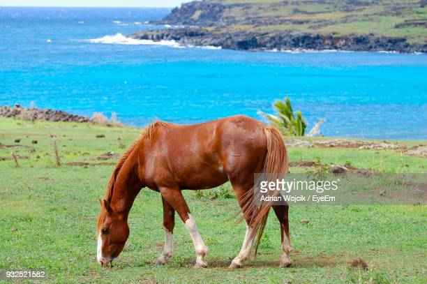 Horse Standing On Field By Sea