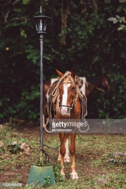 horse standing on field - bortes foto e immagini stock