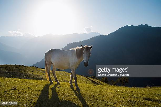 Horse Standing On Grassy Field Against Mountains