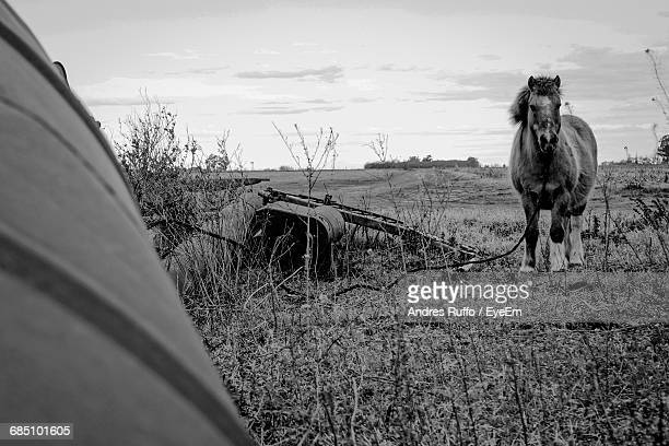horse standing on grassy field against sky - andres ruffo stock pictures, royalty-free photos & images