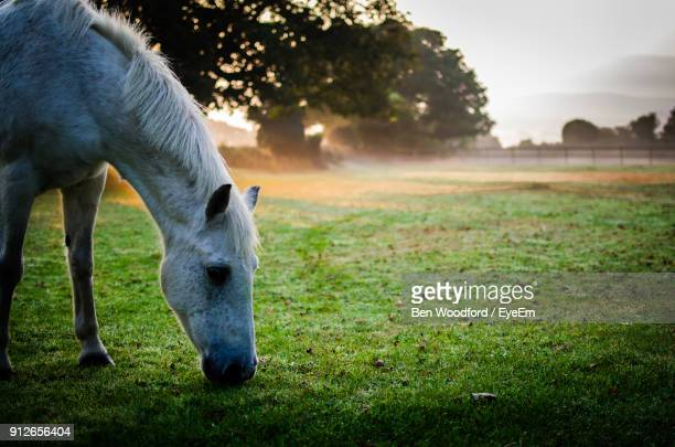 Horse Standing On Grassy Field Against Trees